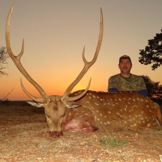 Axis Deer Hunts