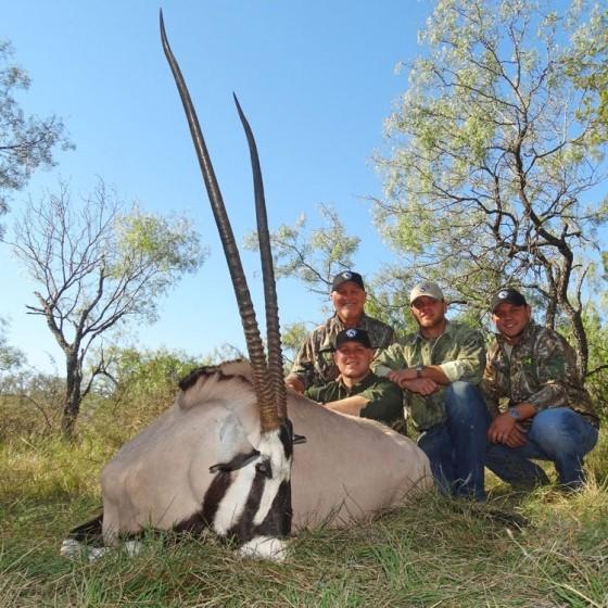 Gemsbok Hunts