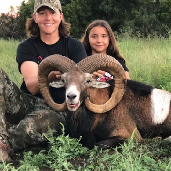 Mouflon Sheep Hunts