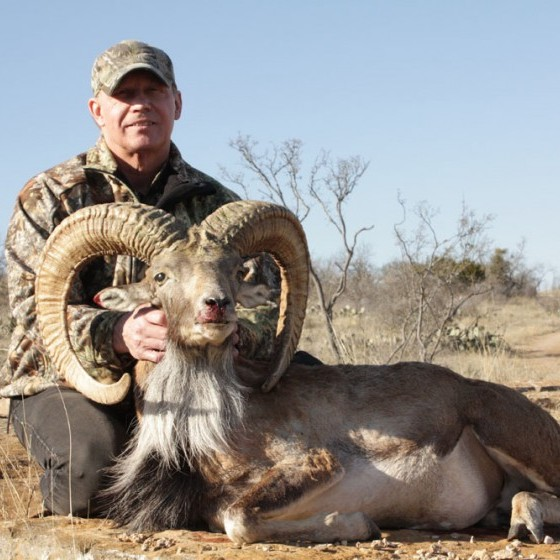 Red Sheep Hunts