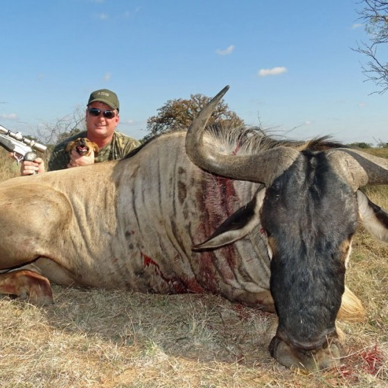 White Bearded Wildebeest Hunts